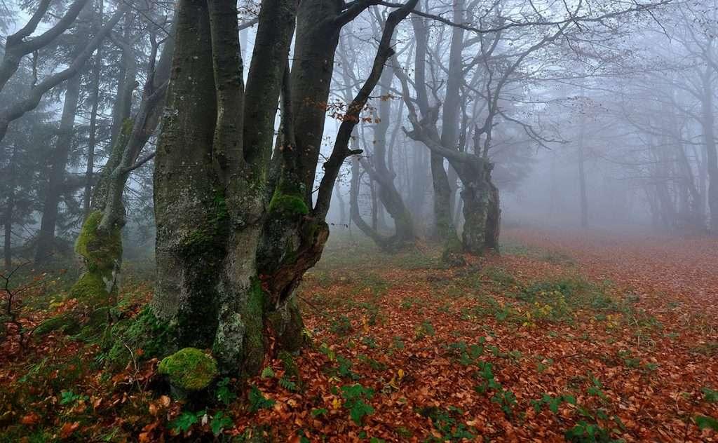 Itinerario fotografico al Parco Regionale del Monte San Vicino
