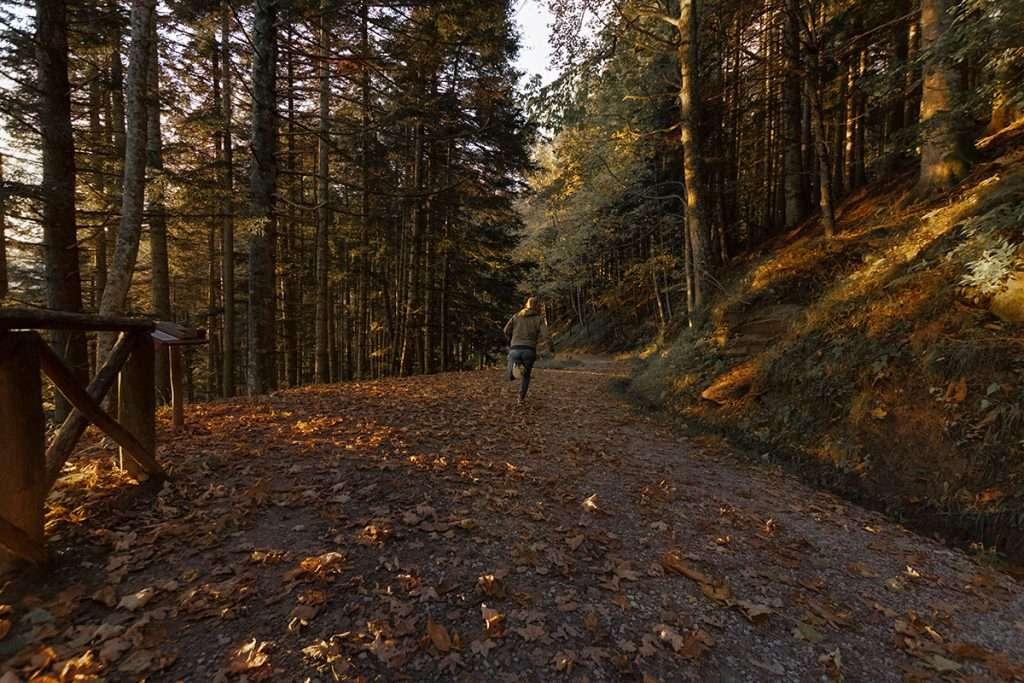 Alla scoperta del Parco delle Foreste Casentinesi.