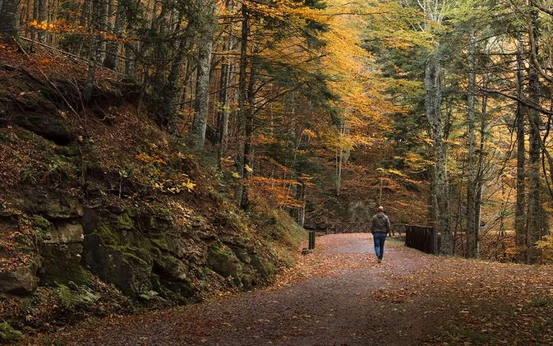 Alla scoperta del Parco Nazionale delle Foreste Casentinesi