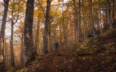 Escursione fotografica alla faggeta di Pianacquadio:alla scoperta del foliage